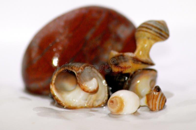 shells stockbilder