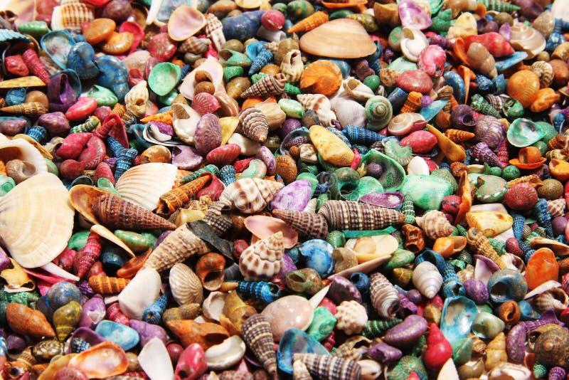 Shells lizenzfreies stockbild