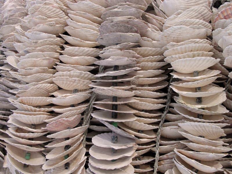 Download Shells stock photo. Image of nature, shellfish, shells - 758948