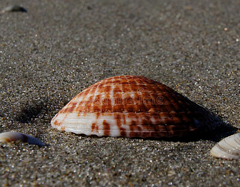 Shells Free Public Domain Cc0 Image