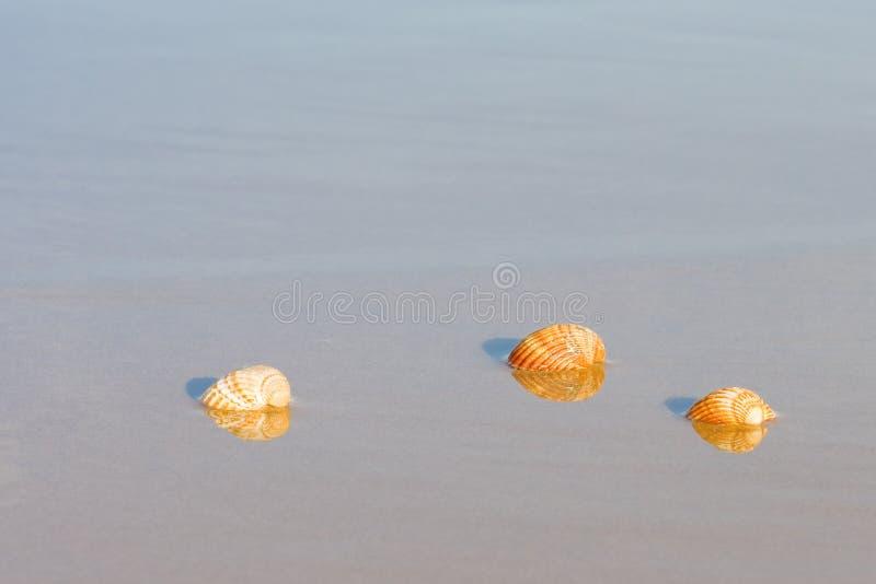 Shells auf dem Strand lizenzfreie stockbilder