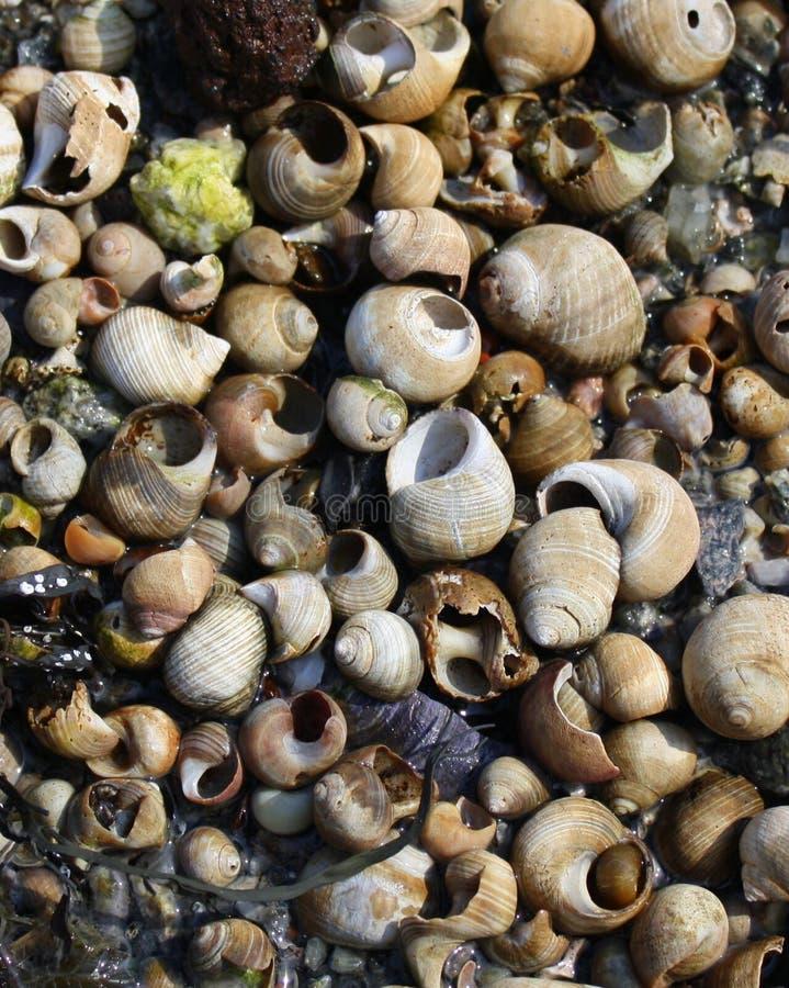 Shells auf Strand stockfotos
