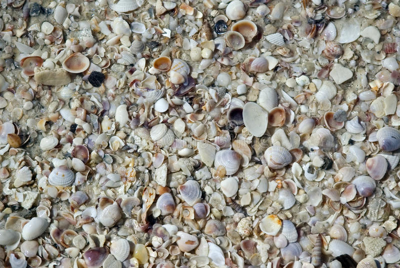 Download Shells background stock photo. Image of summer, background - 25364836
