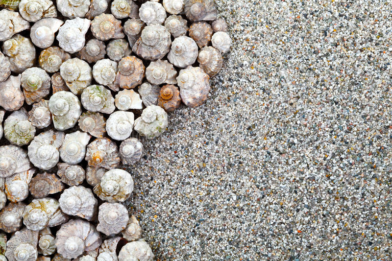 Download Shells Background Stock Photo - Image: 32681470