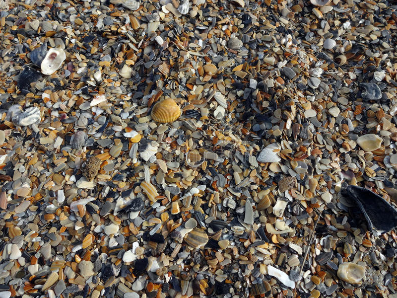 Shells Background. Tiny shells on a beach background image stock image