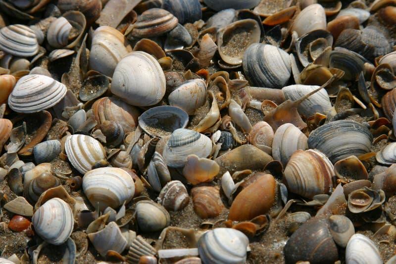 Shells on the beach stock photo