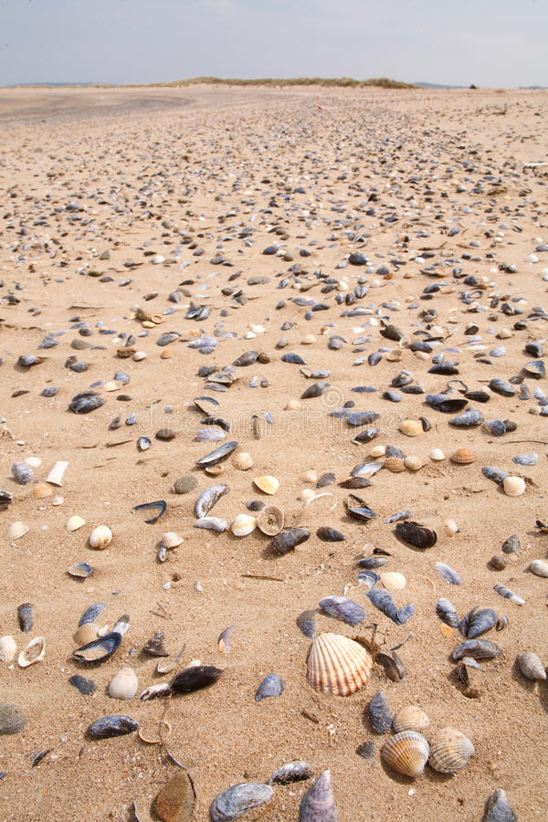 Download Shells on a beach stock image. Image of copyspace, closeup - 26082543