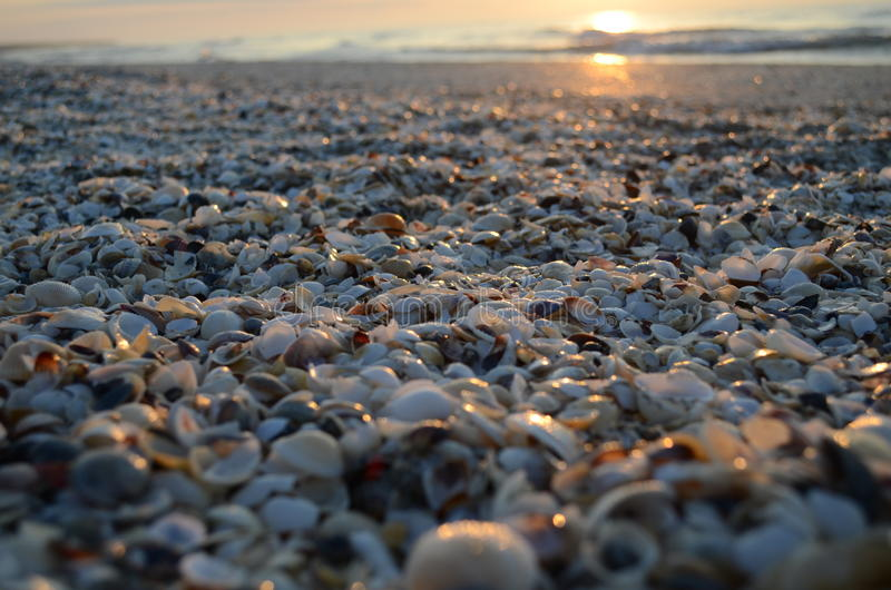 Shells on the beach. In the sunrise stock image