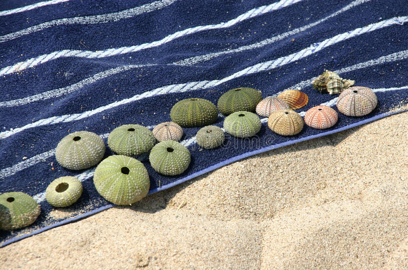 Shells on a beach towel royalty free stock image