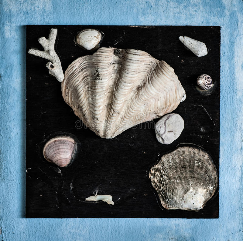Shells on black background. Shells, corals, spongy stone on black background abstraction. Blue frame stock image
