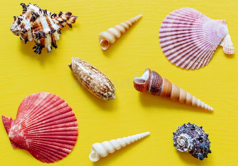Shells on bright yellow. Beautiful summer background. Flat lay. Texture of the shells. stock images