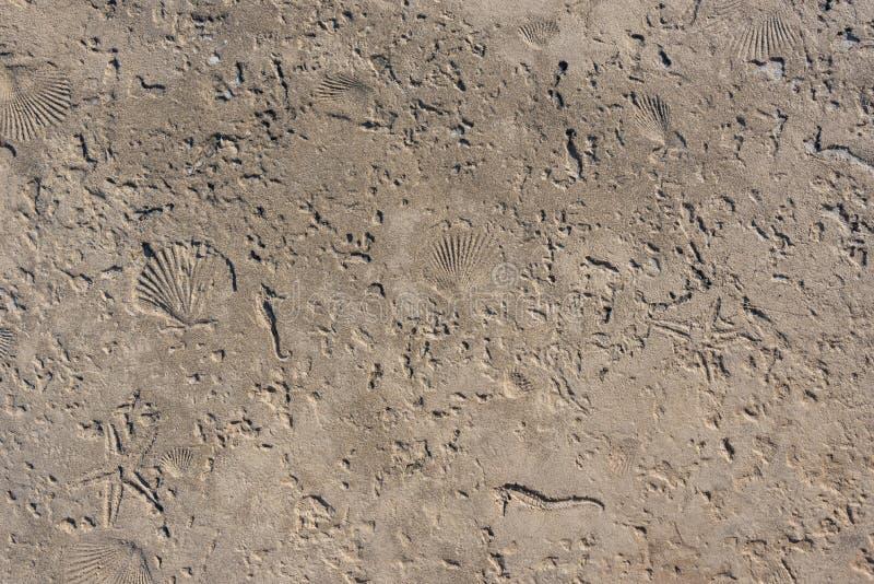 Shells in Cement wordt gestempeld dat stock afbeelding