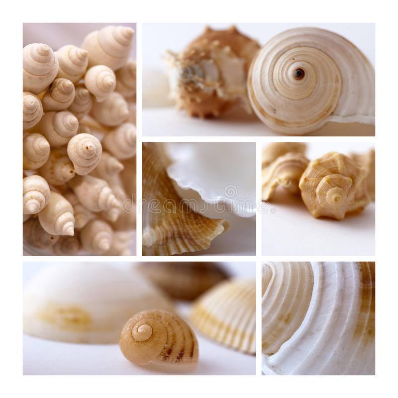 Shells collage stock foto's