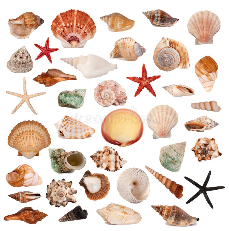 Free Shells Collection Stock Images - 16666404