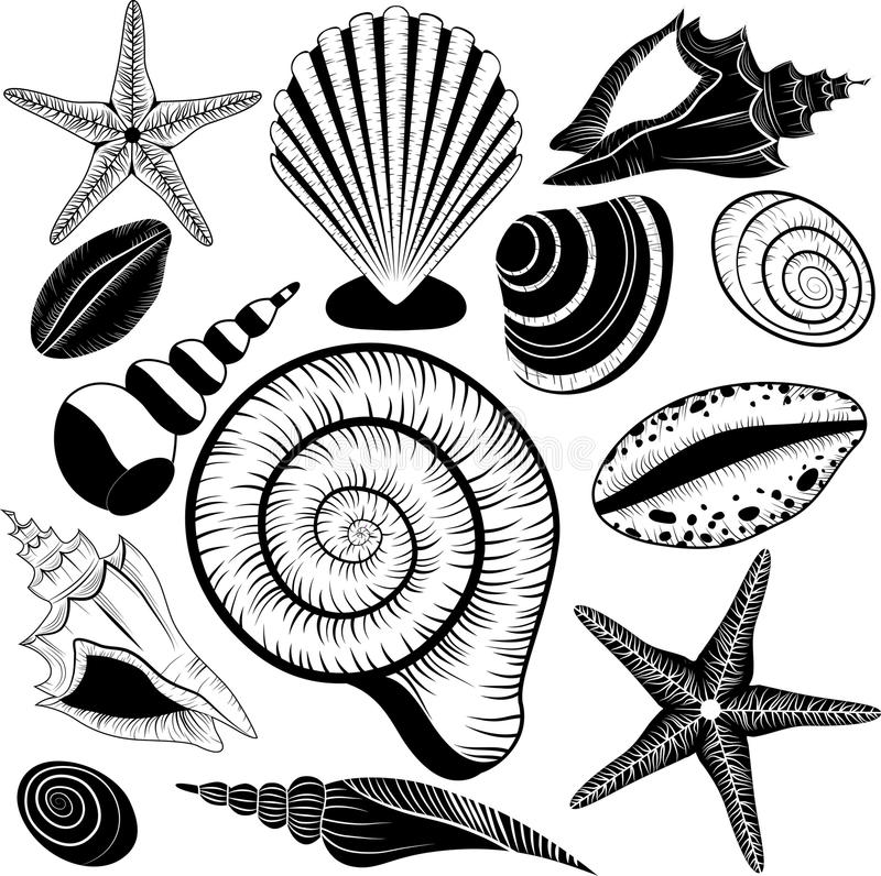 Shells collection. Vector set with seashells and starfish vector illustration