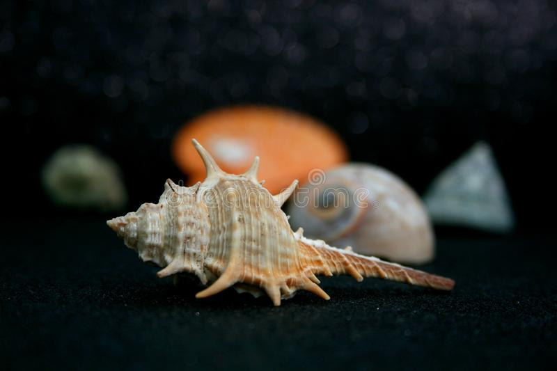 SEASHELLS  20 stock photos