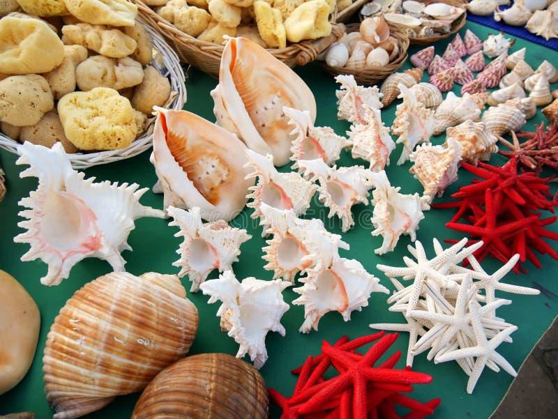 Shells en de herinneringen van de zeestergroep royalty-vrije stock afbeelding