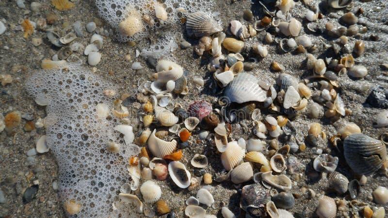 Shells en Oceaan stock afbeeldingen