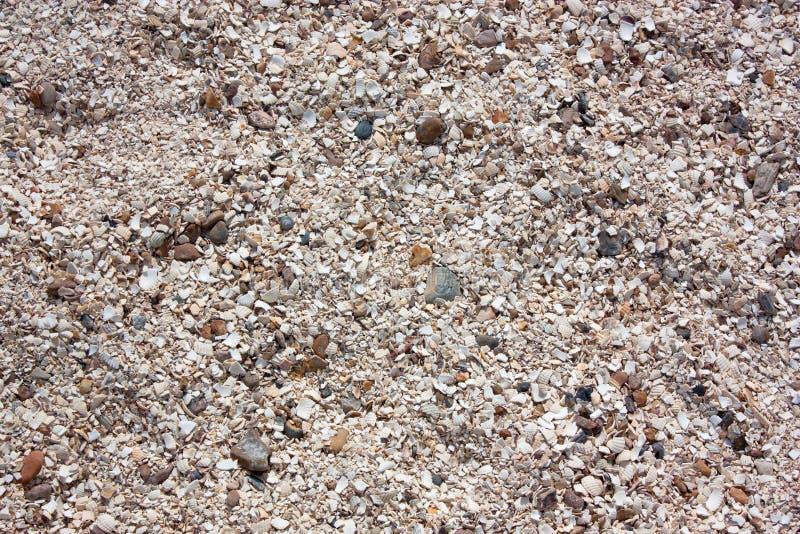 Shells en stenen stock foto's
