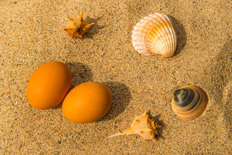 Shells en twee eieren op zandig strand stock foto