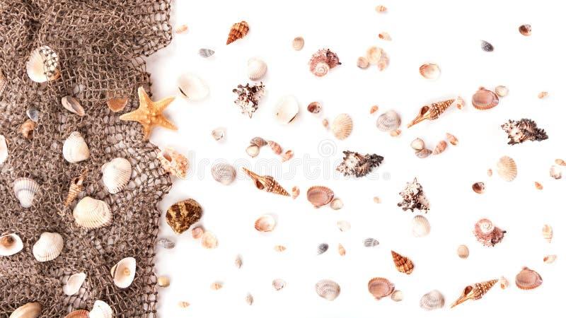 Shells en visnet stock afbeelding