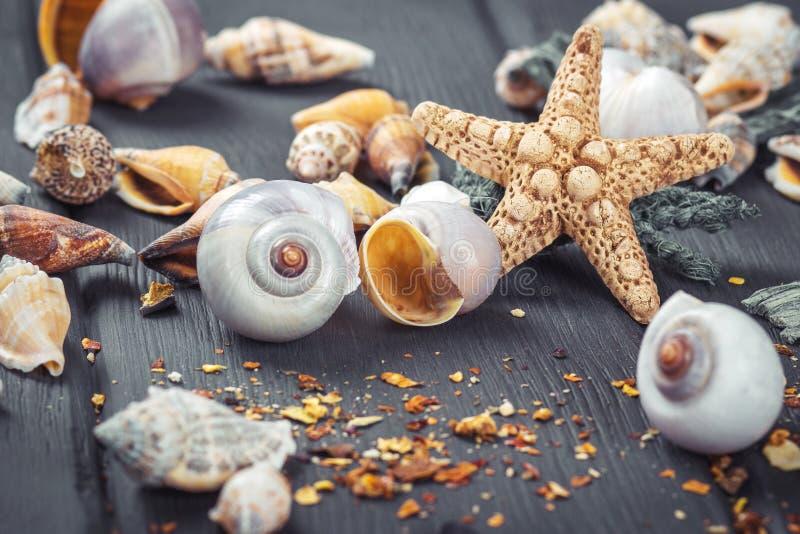 Shells en zeester op blauwe houten achtergrond royalty-vrije stock afbeelding