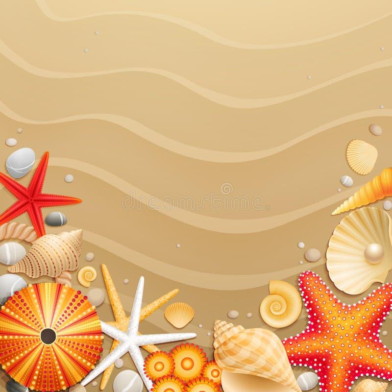 Shells en zeesterren op zandachtergrond royalty-vrije illustratie