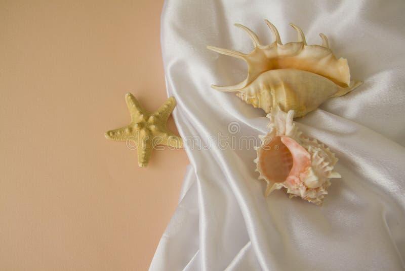 Shells en zijde op roze achtergrond stock foto