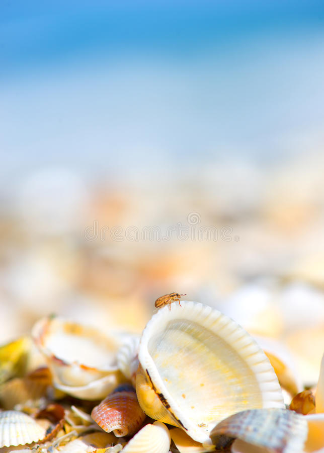 Shells are found on our shelling beaches. Shells of many types and sizes are found on our shelling beaches royalty free stock image