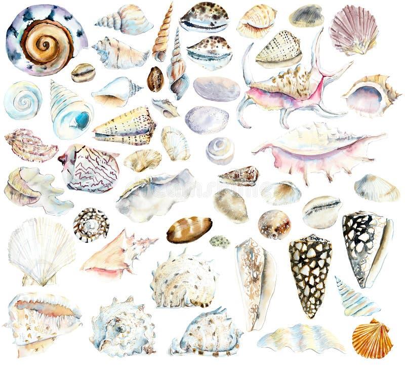 shells Gezeichnete Illustration des Aquarells Hand lizenzfreie abbildung