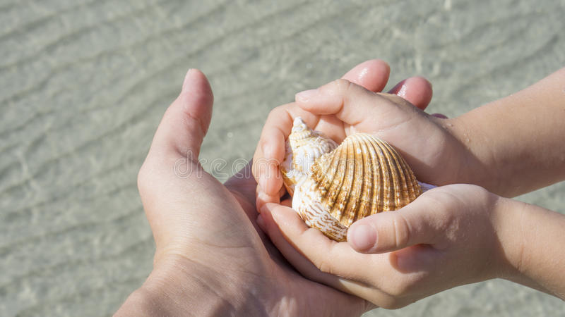 Shells in the hands on background of the sea royalty free stock photos