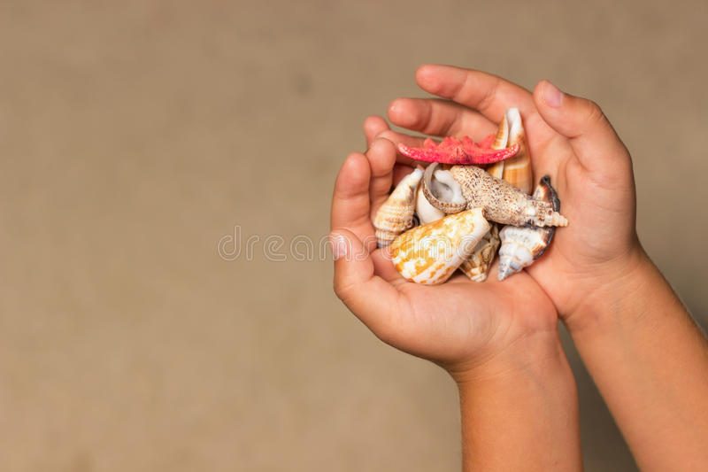 Shells in the hands of a child. Child hands holds shells and starfish. Summer background with sand and shells, royalty free stock photo