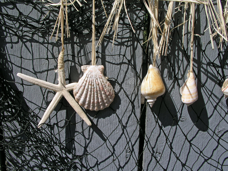 Download Shells hanging on a fence stock photo. Image of shell - 2461262