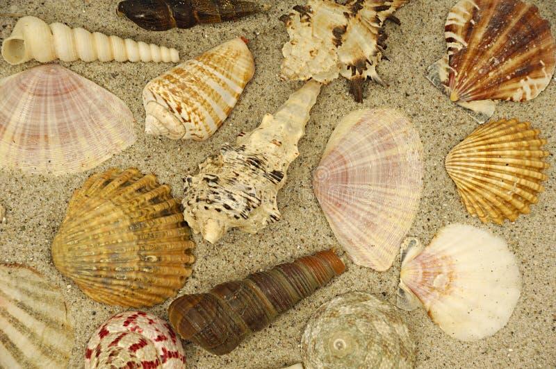 Shells in het zand stock afbeeldingen