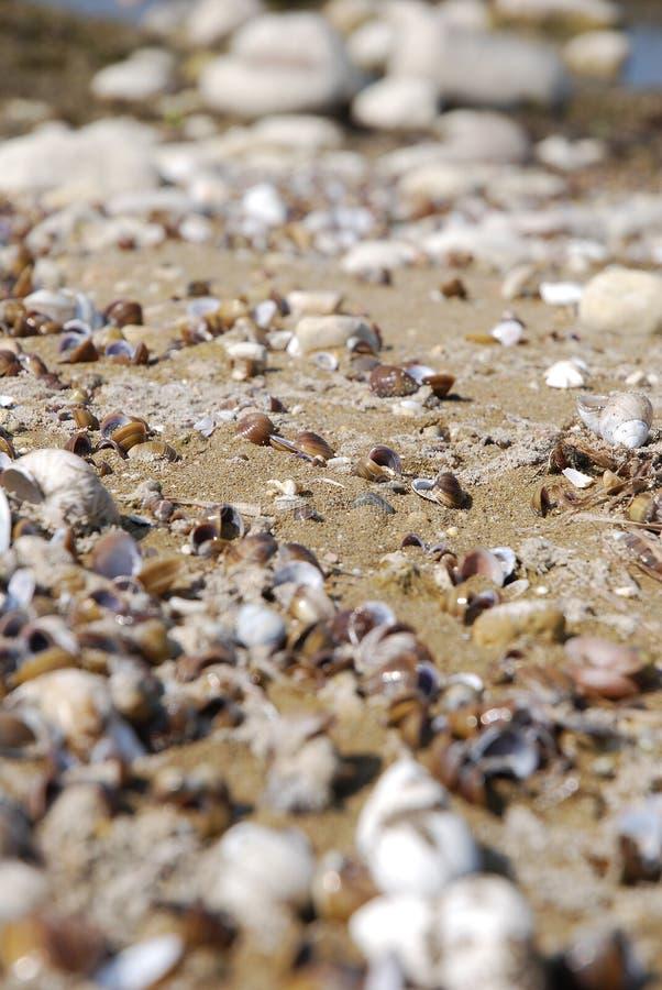 Shells Lake coastline royalty free stock image