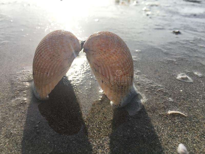 Shells like the wings of an angel royalty free stock photography
