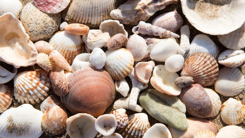 Shells, lots of different sea shells and snail shells on beach stock photo