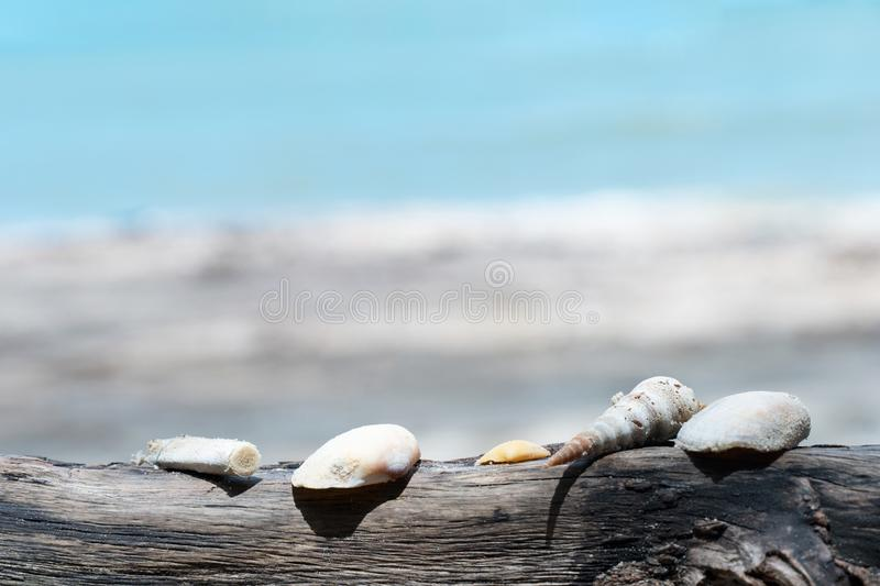 Shell with debris of smoking cigarette on the wood with blur sand beach and blue sea background stock image