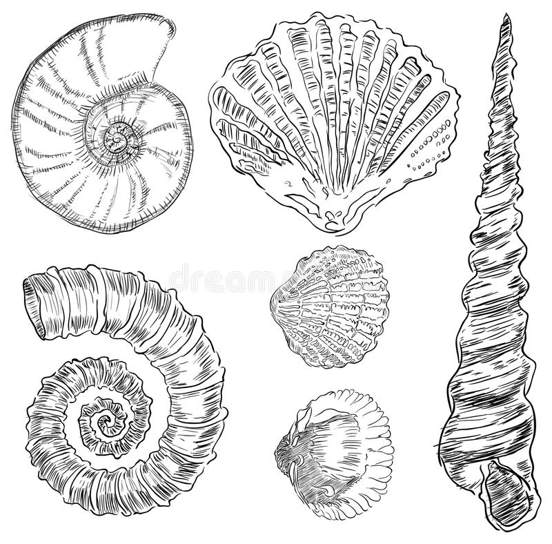 Shells of marine fauna stock illustration