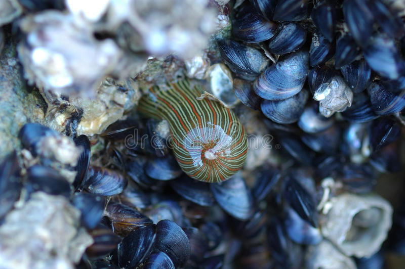 Shells and mollusks. On the reef stock photo
