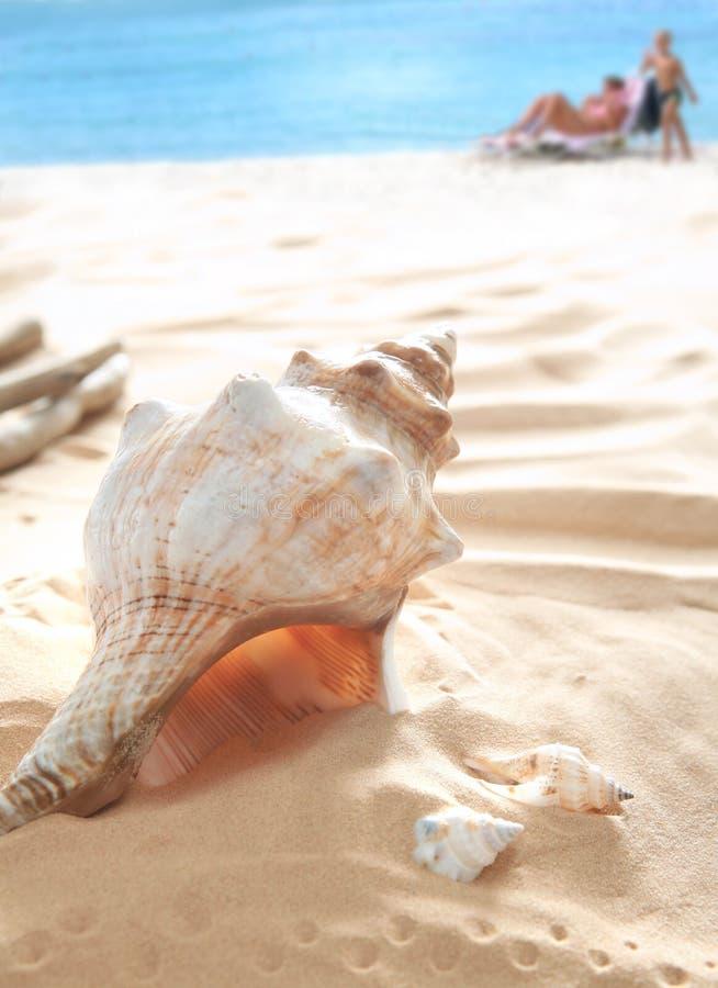 Free Shells On Beach Stock Photos - 6656063