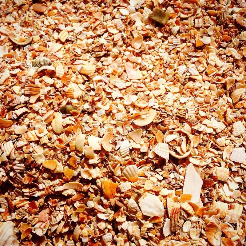 Shells op de Zwarte Zee royalty-vrije stock afbeeldingen