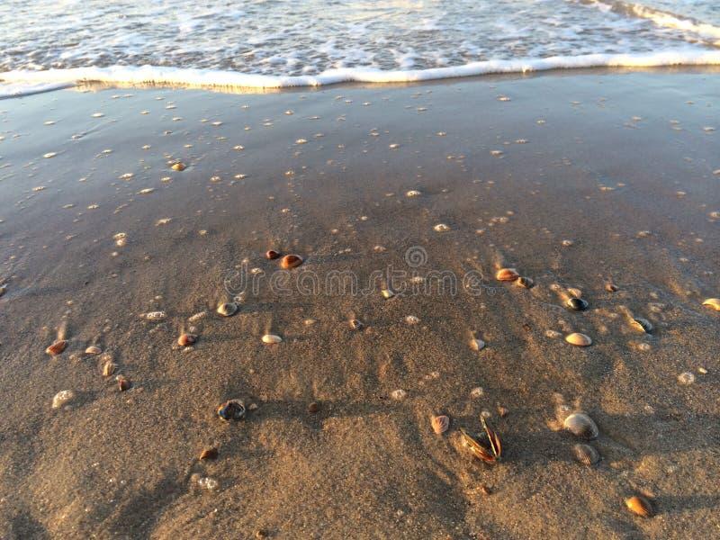 Shells op een Nederlands strand royalty-vrije stock afbeelding