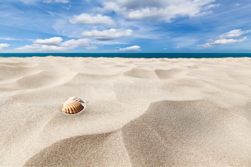 Shells op een strand stock afbeelding