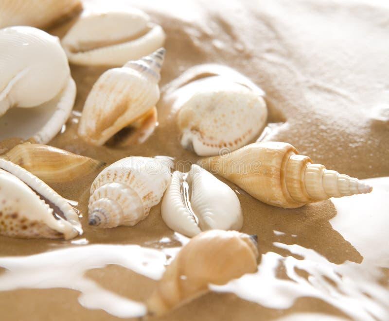 Shells op het strand stock afbeelding