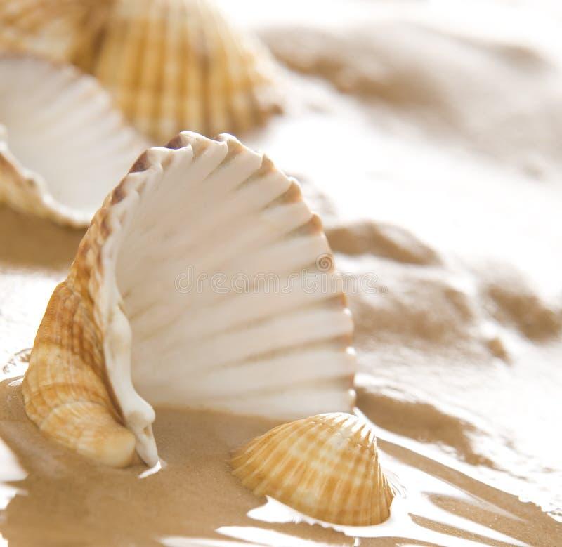 Shells op het strand royalty-vrije stock foto's