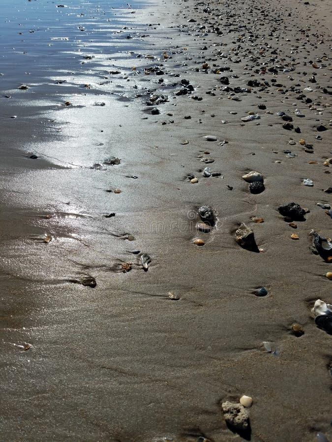 Shells op het strand door de Atlantische Oceaan stock foto