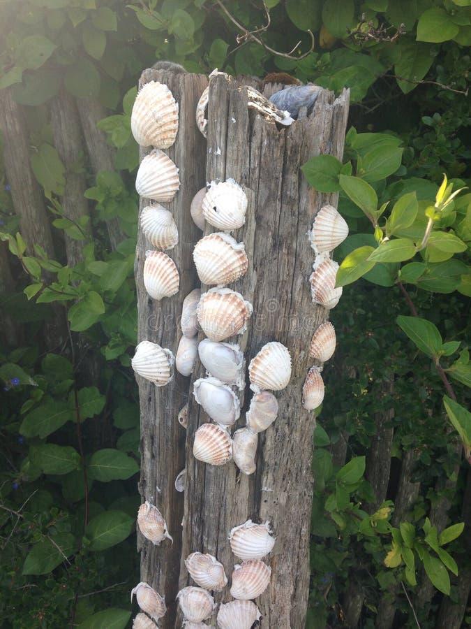 Shells op hout royalty-vrije stock afbeelding
