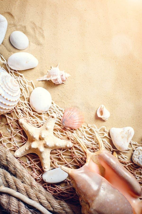 Shells op tropisch strand Rust op het strand Reis Achtergrond met exemplaarruimte stock foto
