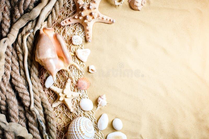 Shells op tropisch strand Rust op het strand Reis Achtergrond met exemplaarruimte stock fotografie